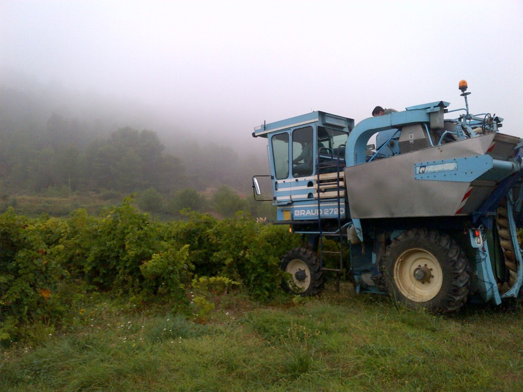 Vendanges MP Berthier