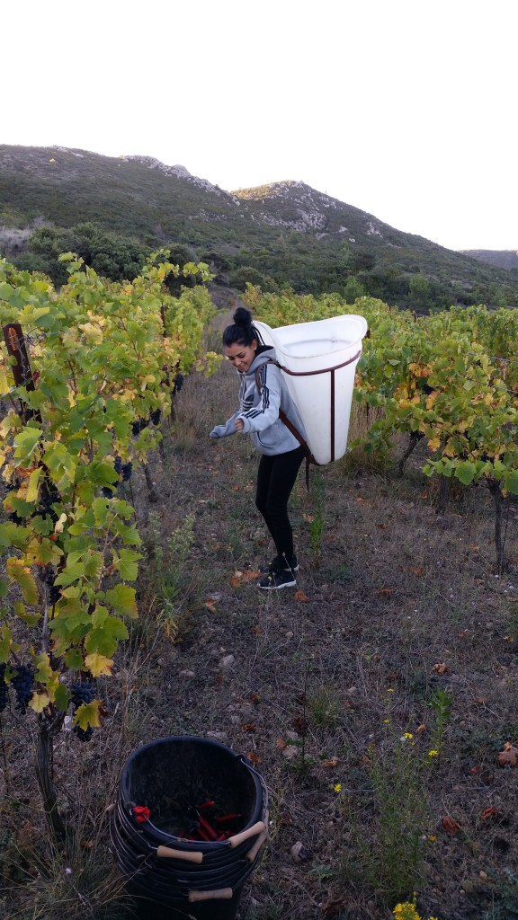 8h15 - Marina s'essaie au portage de hotte... vide